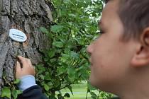 DENDROLOGICKÁ STEZKA. Mariánské Lázně označily více jak sto stromů porcelánovými tabulkami. Některé z označených dřevin dokonce pamatují zahradníka Václava Skalníka.