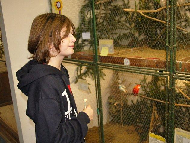 Stovky exotických ptáků byly k vidění na výstavě v Aši. Obdivovali je malí i dospělí.