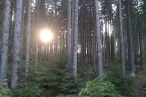 Vládní opatření nařizují nosit roušku anebo respirátor i ve venkovních prostorech, pokud se nacházíte v zastavěném území. V lese roušku můžete sundat.