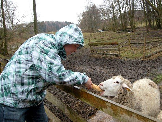 CHOVATELÉ ovcí a skotu nejen na Chebsku se v minulých letech museli vyrovnat s hrozbou katarální horečky ovcí. Krátce poté, co mohla Česká republika konstatovat, že na našem území není evidován žádný výskyt tohoto viru, může hrozit, že se na našem území o
