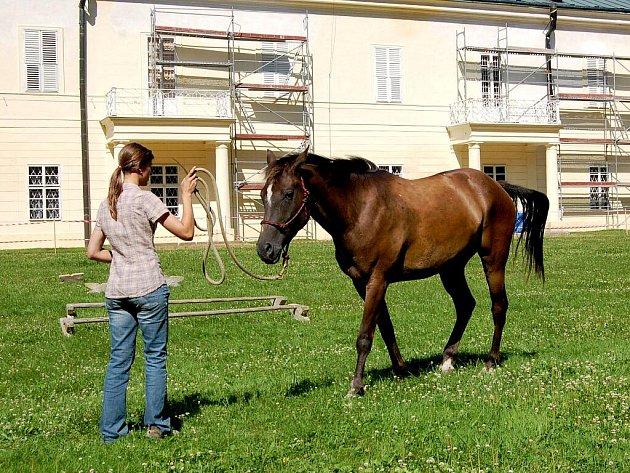 Metodu přirozené komunikace s koněm neboli horsemanship přiblížila v sobotu návštěvníkům kynžvartského zámeckého parku dvaadvacetiletá Dana Kortusová z Březové u Sokolova (na snímku).
