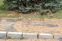 PRASKLY TRUBKY. Na chebském sídlišti Skalka o víkendu prasklo potrubí. Voda vytékala z pod stromu.