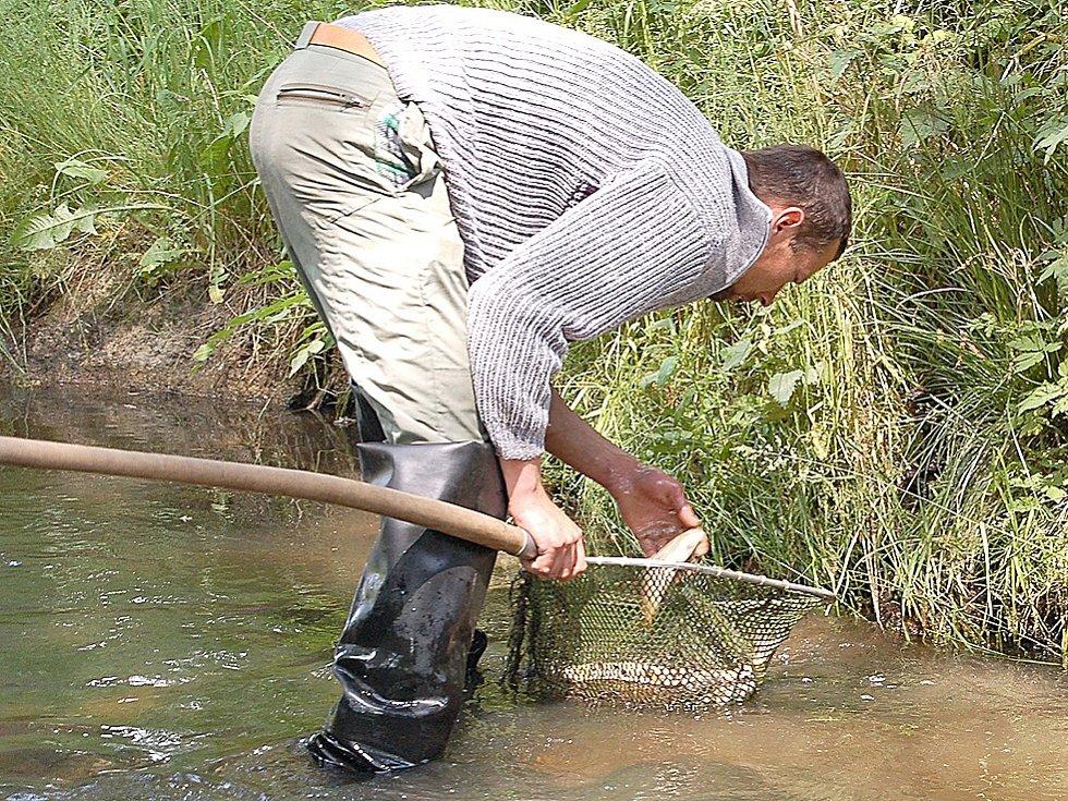 Plesenští rybáři stále sbírají uhynulé ryby