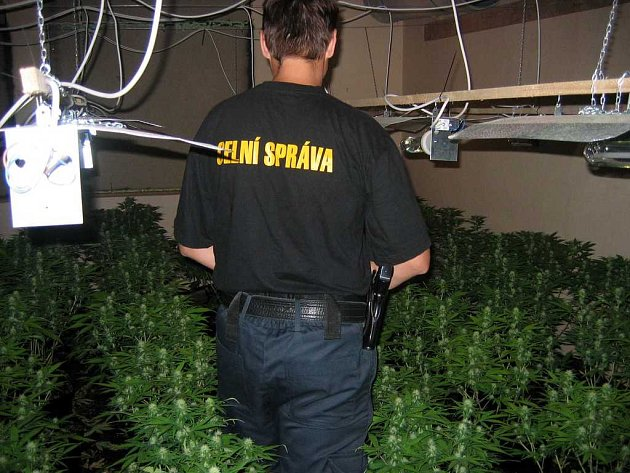 Pěstírna marihuany v Trstěnicích