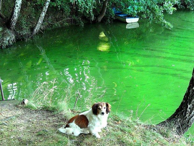 Voda v přehradní nádrži Skalka je už několik dnů odporně zelená