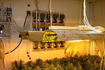 Policisté objevili pěstírnu marihuany v Hranicích u Aše