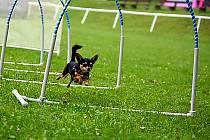 Hoopers je určený pro psy všech ras a bez rozdílu věku.
