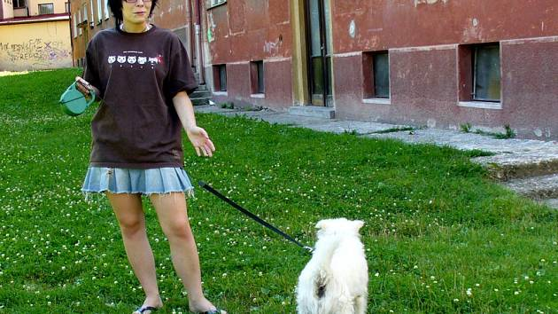 BEZ VODÍTKA NE!  Kromě dvou vymezených lokalit musí všichni majitelé psů své miláčky v Chebu vodit na vodítku nebo je přenášet ve vhodné přepravce.