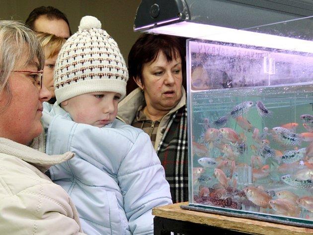 Akvaristické trhy v Plzni