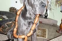 Mým nejlepším přítelem a parťákem do života je pejsek čtyřleté modré německé dogy Lucky. Miluje pohyb, lidi, nekonečné mazlení a takto ho každý rok při jeho narozeninách náležitě odměníme za to, že je.
