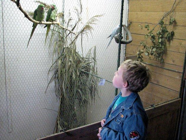 Výstava exotického ptactva v Aši