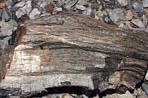 Těžební stěna bývalého uhelného lomu Medard-Libík obsahuje chráněný úkaz Kamenné pařezy.