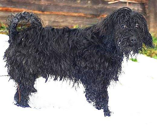 TENTO CHLUPATÝ ROŠŤÁK je jedním ze psů v útulku v Horní Hraničné. Pokud kdokoliv po Silvestru postrádá své zvíře, měl by se optat i tam.