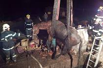 Koně z jímky vysvobodili hasiči