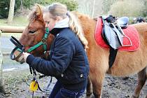 Chebský dům dětí a mládeže obývají dva noví poníci, Jolita a Míša. Jolita umí i zajímavé kousky