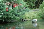 Hasiči na žádost policie odčerpávali vodu z rybníka ve Štítarech u Aše, který se nachází v těsné blízkosti neštěstí, aby umožnili pátrání po vražedné zbrani.