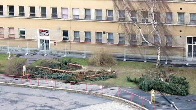 Pokácené stromy u chebského nádraží.