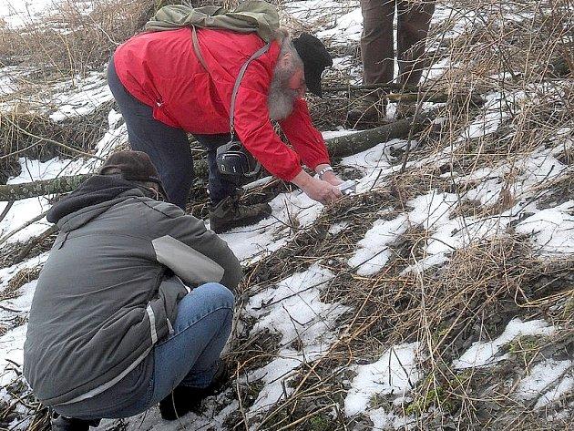 ODBORNÉ mapování hub členy mykologického klubu Slavkovský les se většinou neobejde bez fotografování zajímavých hub.