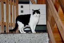 JEDNA ze zachráněných koček, která je v péči ašské seniorky Anny Schwammenhöferové už sedmnáct let. Jak žena, tak ašští strážníci vyzývají, aby už lidé další kočky nenosili.