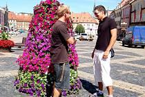 MÍSTNÍ Tomáš Slačík a Jan Petržal ze Skalné si květníky oblíbili. V Chebu prý podtrhují letní atmosféru.