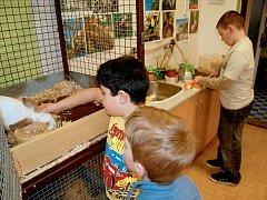 Na nově zrekonstruované prostory kroužku teraristiky a akvaristiky v Domě dětí a mládeže Sova v Chebu (DDM) se mohou těšit mladí zájemci.