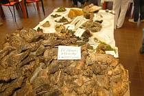 Nejen senioři si mohli prohlédnout celkem sto čtyřicet druhů hub v Domově pro seniory na chebském sídlišti Skalka.