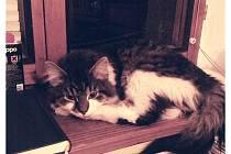 Naším mazlíčkem je kocour Chico.