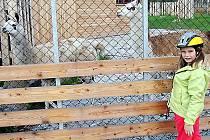 Ve františkolázeňském lesoparku Amerika mohou nyní lidé a děti obdivovat lamy.