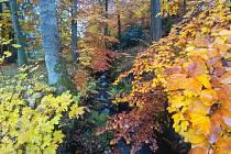Připomeňte si, jak barevně vypadal na podzim zámecký park v Lázních Kynžvartu.