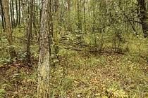 Děvín je přírodní rezervace, která se nachází jižně od obce Křižovatka na Chebsku.