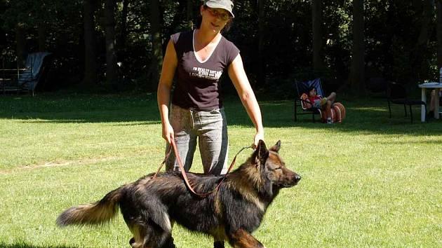 V Chebu je registrováno na tři tisíce psů. Jen málokterý z nich je ale tak vychovaný jako německý ovčák Nero Kateřiny Polákové