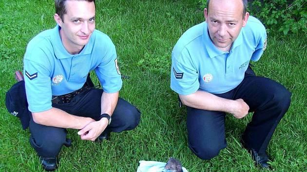 Chebští strážníci zachránili mladou kunu před smrtí ve ventilaci