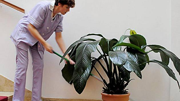 RENATA HERBOVÁ, mentálně postižená žena, dostala šanci na samostatný život. Občanské sdružení Rytmus jí našlo práci v hotelu Imperial ve Františkových Lázních a poskytlo jí asistentku na pomoc v domácnosti.
