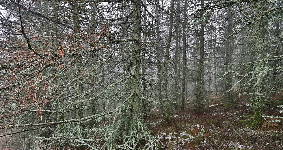 Lesný a Lysina ve Slavkovském lese a výhledy do okolí...