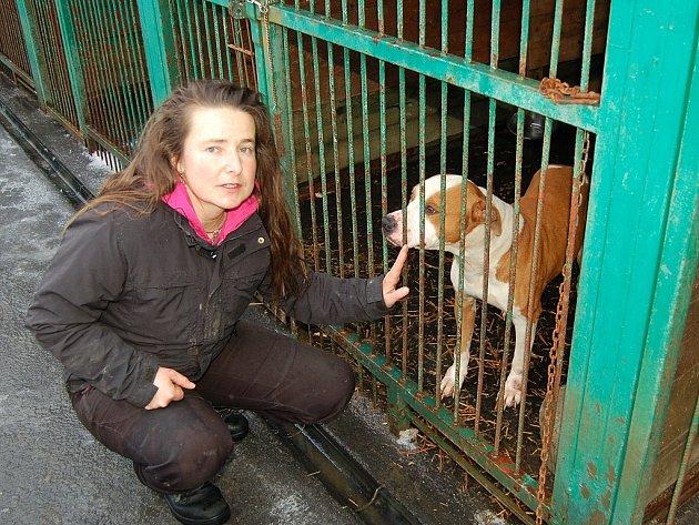 MARIE LOKINGOVÁ (na snímku) musela psa odchytit a umístit do samostatného kotce.