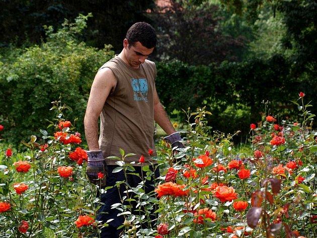 Zahraniční studenti opět pomáhají s obnovou zámeckého parku v Lázních Kynžvartu