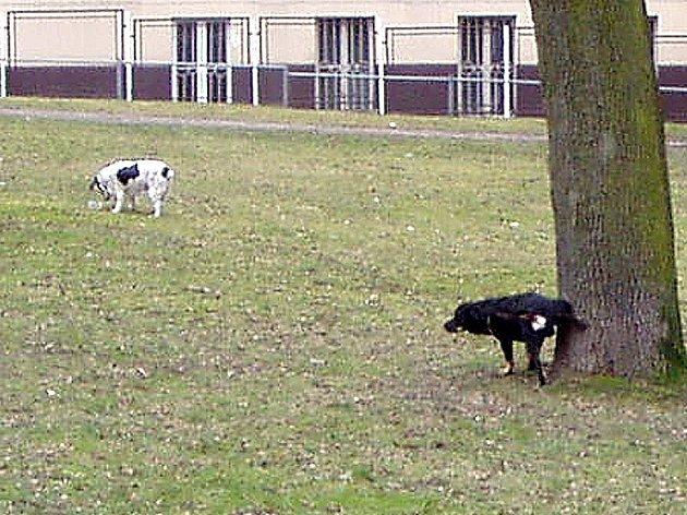 Volně pobíhající psi okupují chebské parky