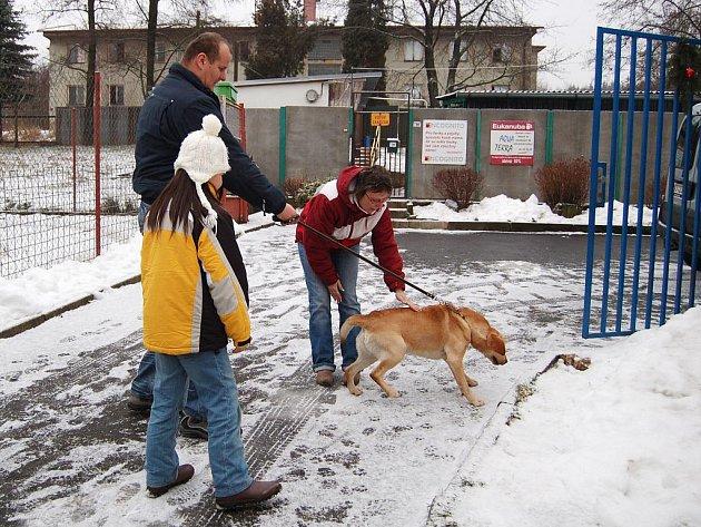 Opuštěný labrador dostal nový domov hned na Nový rok.