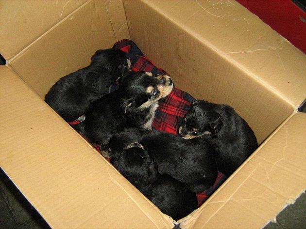 Pejsky našli strážníci v krabici.