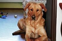 Naším mazlem je pes Loky.