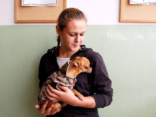 MLADÁ Alena Slezáková psí oblečky miluje. A zvlášť na malých pejscích, jako jsou čivavy.