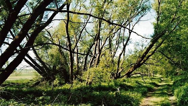 Přírodní rezervace Rathsam chrání meandrující soutok Ohře a Reslavy a přilehlé mokřady.
