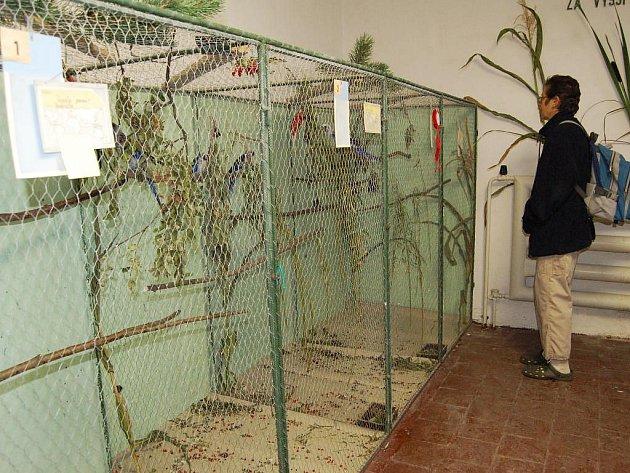 V Aši se uskutečnila výstava exotického ptactva