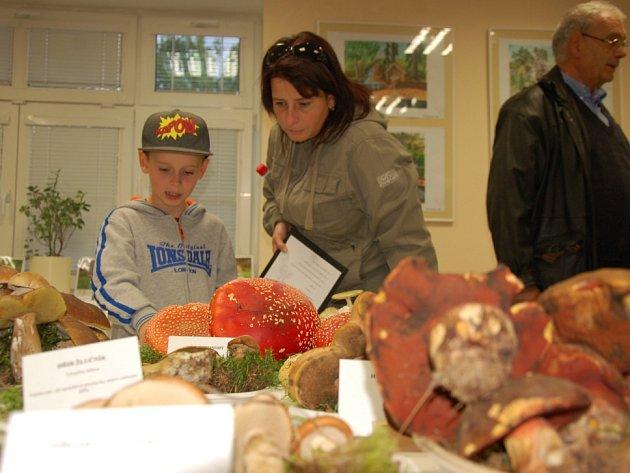 TRADIČNÍ VÝSTAVA HUB opět do budovy Správy chráněné krajinné oblasti v Mariánských Lázních přilákala stovky návštěvníků.