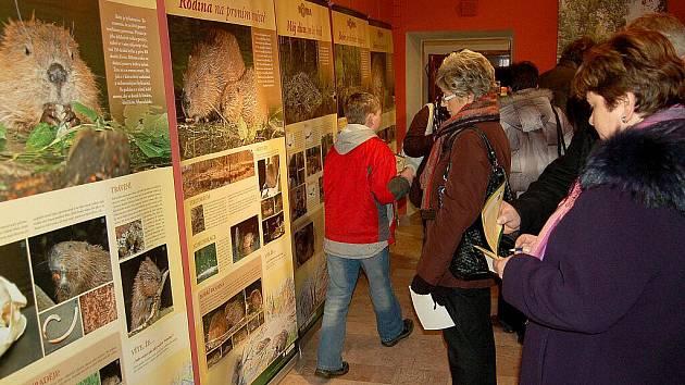 MNOHO ZÁJEMCŮ se zúčastnilo znovuotevření chebského muzea po dvouměsíční pauze. Muzeum Cheb zahájilo svou další sezonu vernisáží výstavy o bobru evropském a vydře říční.