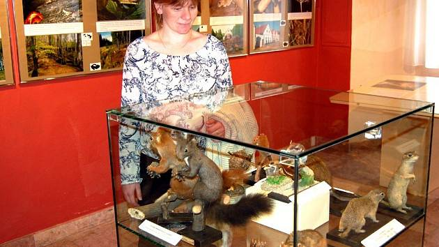 Expozice drobných savců v chebském muzeu