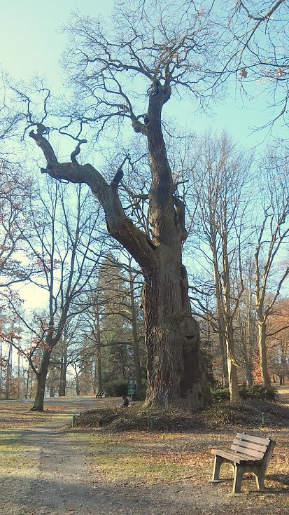 Tisíciletý dub u Dalovic