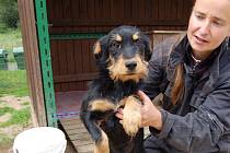 Malou kříženku, dospělou fenu a psa někdo vyhodil z auta v Pelhřimově u Chebu. Štěně se pracovníkům útulku podařilo odchytit, rodiče jsou opatrní. Lyře je asi sedm měsíců.