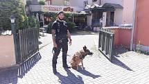 Pocovidová opatření se rozvolňují, noční život ve městě ožívá a strážníci a jejich psovodi se prakticky nezastaví, problémy se vyskytují nonstop.
