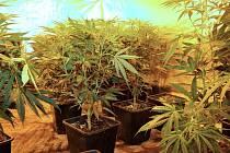 Nelegální pěstírnu marihuany objevili policisté ve městě Skalná na Chebsku.